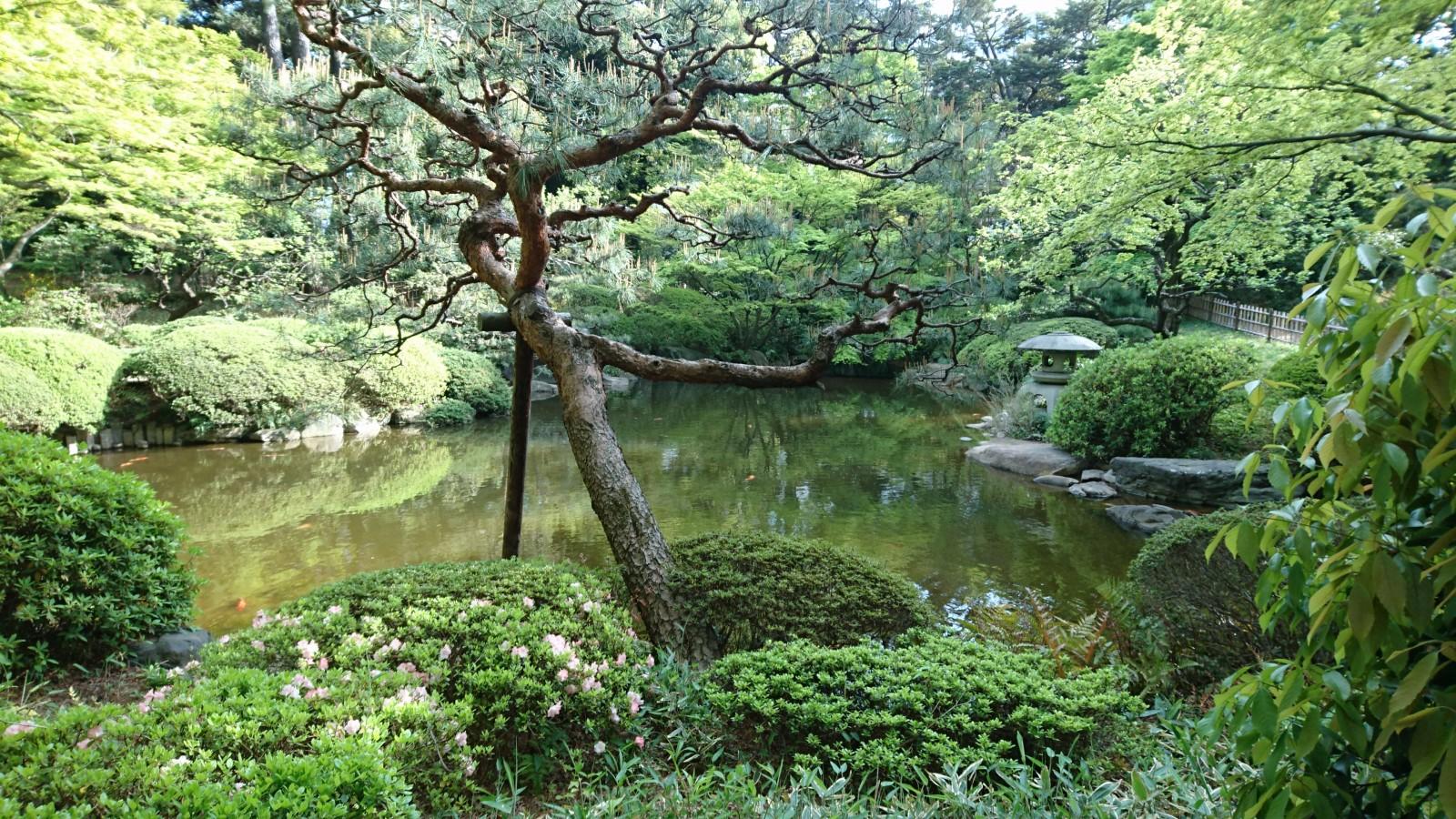 garden of tea room